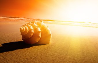Shell Sand Ocean Sunset Sunrise 1920 x 1080 340x220