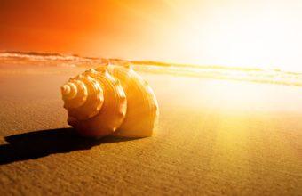 Shell Sand Ocean Sunset Sunrise 1920 x 1080 340x220
