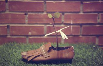 Shoes Plants Grasses 1920 x 1280 340x220