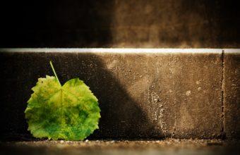 Single Green Leaf 2880 x 1800 340x220