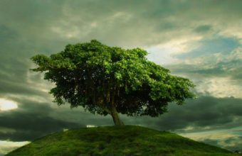Single Tree On The Hill 1920 x 1200 340x220