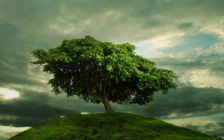 Single Tree On The Hill 1920 x 1200 768x480