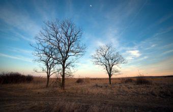 Sky Trees Spring 1680 x 1050 340x220