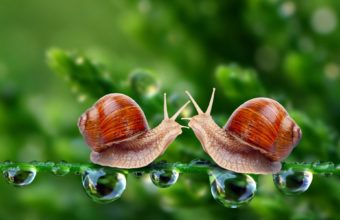 Snails Macro Drops Meeting 1920 x 1200 340x220