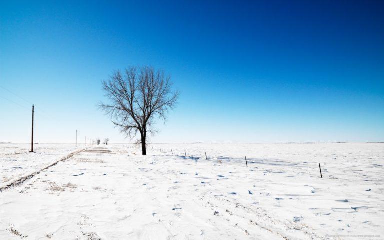 Snow Road Tree 1680 X 1050 768x480
