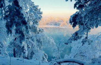 Snow Tree 2560 X 1600 340x220