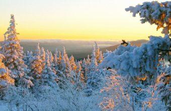 Snow Trees 1920 X 1200 340x220