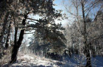 Snow Trees Winter 1920 x 1200 340x220
