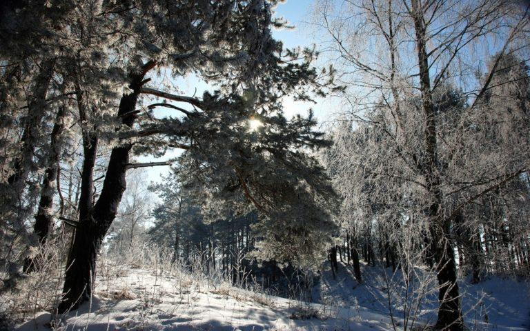 Snow Trees Winter 1920 x 1200 768x480