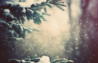 Snowfall Wallpapers 01 1920 x 1200 340x220