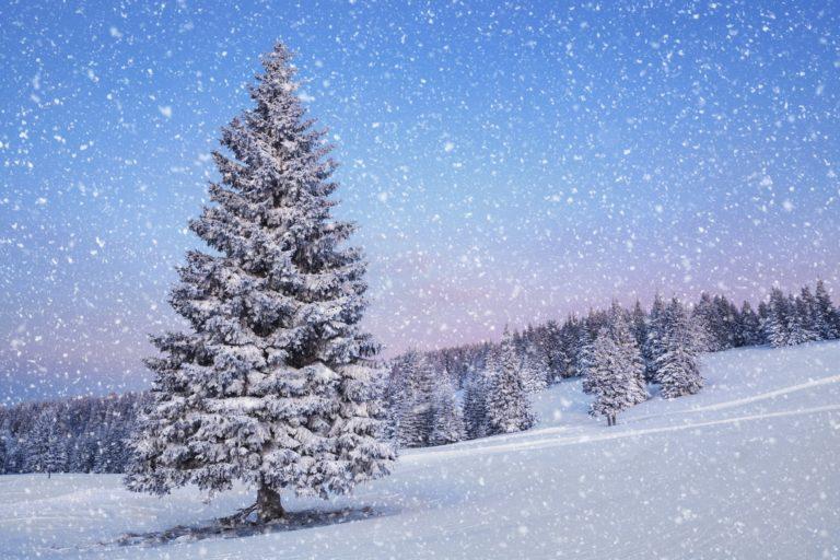 Snowfall Wallpapers 07 5616 x 3744 768x512