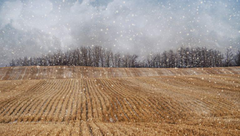 Snowfall Wallpapers 22 2048 x 1159 768x435