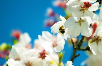 Spring Bee 3000 x 1875 340x220
