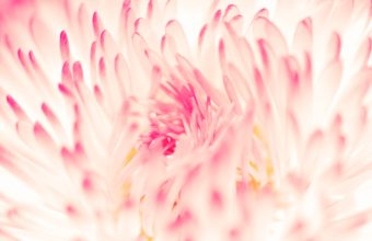 Spring Daisy Flower 2560 x 1600 340x220