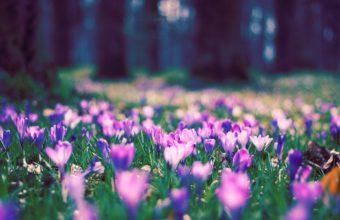 Spring Flower Park 1920 x 1200 340x220