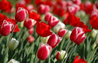 Spring Flowers 1920 x 1200 340x220