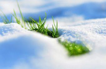 Spring Snow Grass 1920 x 1080 340x220