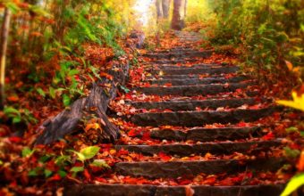 Stairs Park Trees Leaves Autumn Fall 1920 X 1200 340x220