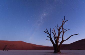 Stars Tree Desert Sky 1920 x 1200 340x220
