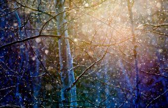Start Snow Fall 1920 x 1200 340x220