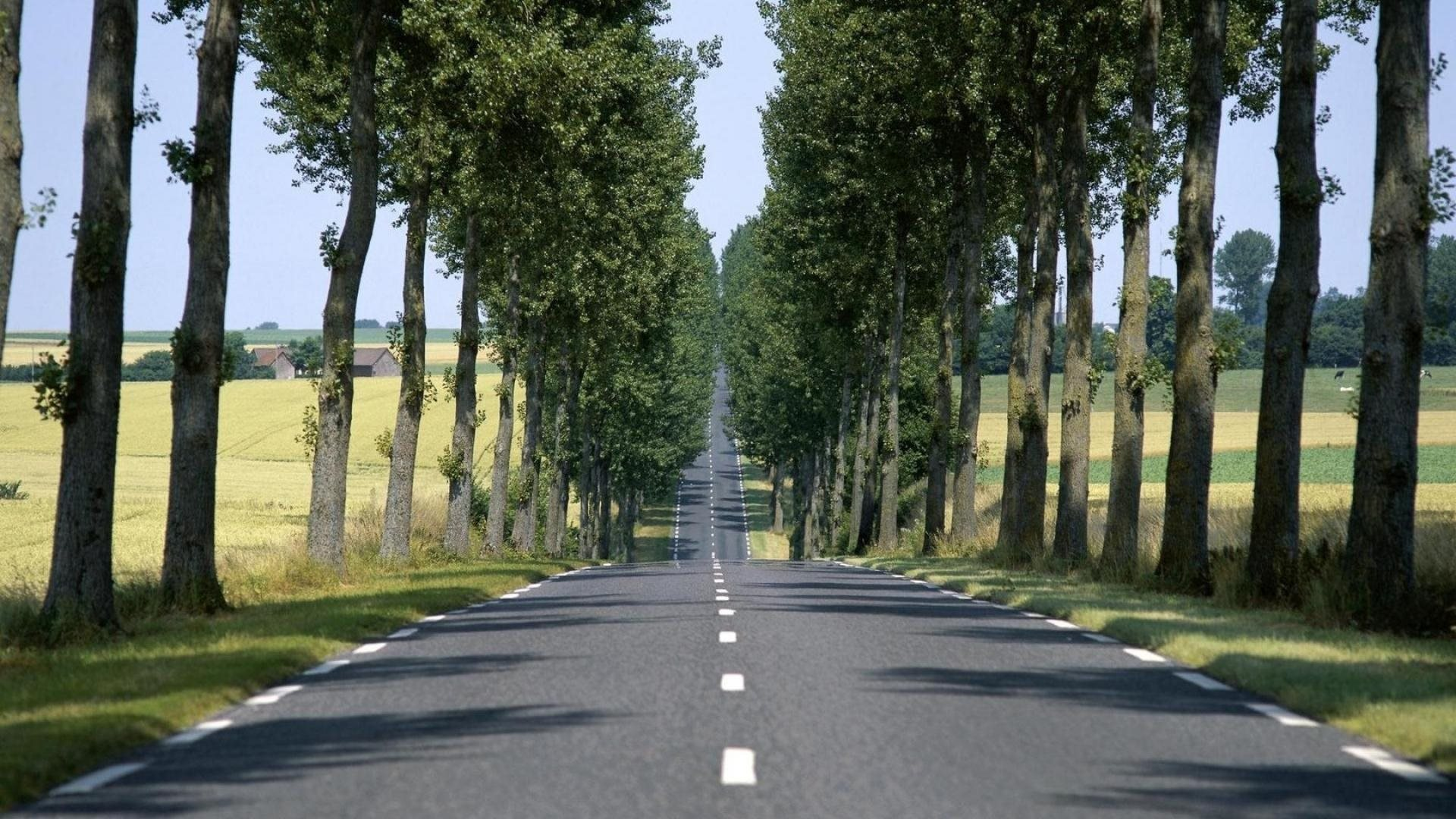 Straight Road Lined By Trees 1920 X 1080