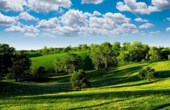Summer Field Meadow Trees Sky 1920 x 1080 340x220