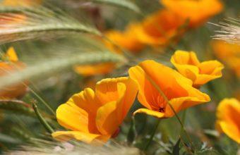 Summer Flowers 2560 x 1600 340x220