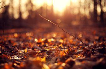 Sun Autumn Macro Leaves 2560 X 1600 340x220