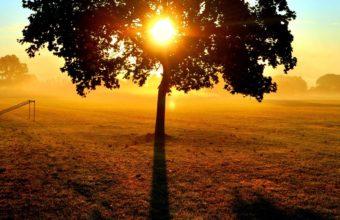 Sun Tree Branches 1920 x 1080 340x220