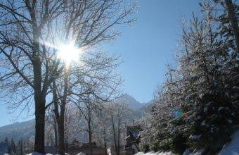 Sun Trees Beams 1600 x 1200 340x220