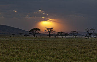 Sunset Africa Savanna Landscapes 1920 x 1200 340x220