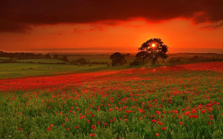 Sunset Landscapes Nature Fields 1920 x 1200 768x480