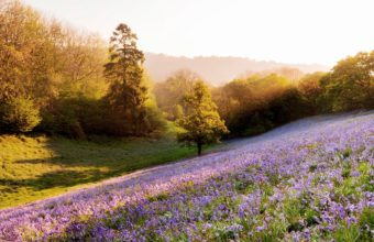 Sunset Landscapes Nature Flowers 2560 x 1600 340x220