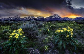 Sunset Mountains Field Flowers 2560 x 1600 340x220