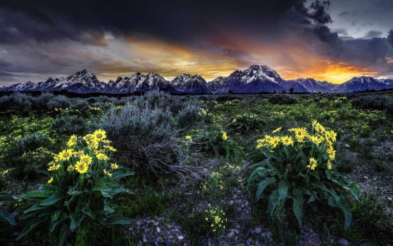 Sunset Mountains Field Flowers 2560 x 1600 768x480