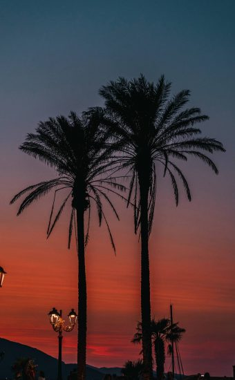 Sunset Phone Wallpaper 1440x2560 56 340x550