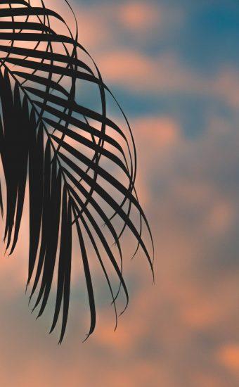 Sunset Phone Wallpaper 1440x2560 68 340x550