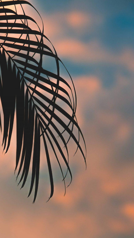 Sunset Phone Wallpaper [1440x2560] - 68