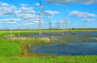 Swamp Electricity High Voltage 3264 x 2448 340x220