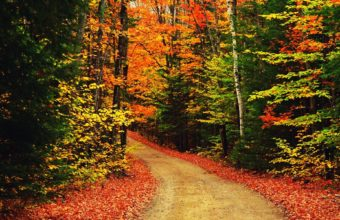 The Autumn Scenic Scene 1920 X 1200 340x220