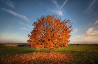 Tree Autumn Field 1920 X 1200 340x220