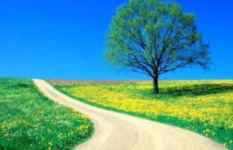 Tree Field Flowers 1200 x 900 1 340x220