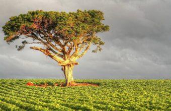 Tree Field Grass 2560 X 1600 340x220