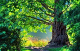 Tree Light Nature Colors 1920 x 1200 340x220