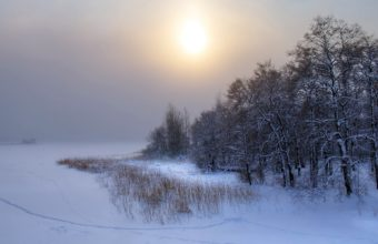 Tree Snow 1680 X 1050 340x220