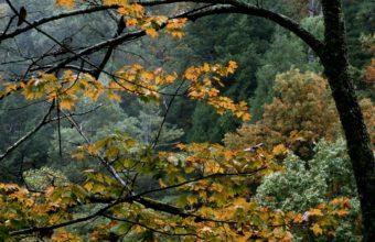 Trees Autumn Branches 1200 X 900 340x220