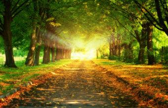 Trees Autumn Fall Light Sun 1920 X 1200 340x220