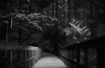 Trees Dark Forest Path Monochrome 2560 x 1600 340x220