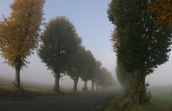 Trees Fog Haze 1440 x 810 340x220