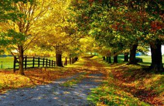 Trees Leaves Foliage Road Golden Autumn 1920 X 1200 340x220
